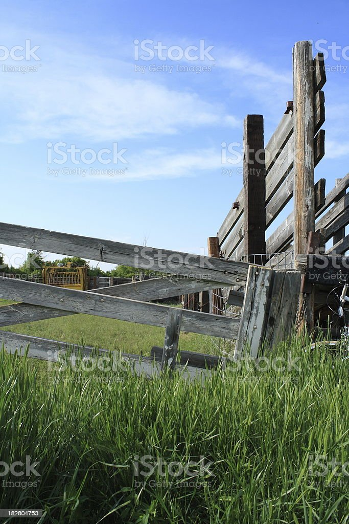 old worn gate, squeeze, and cattle shute vibrant colors royalty-free stock photo