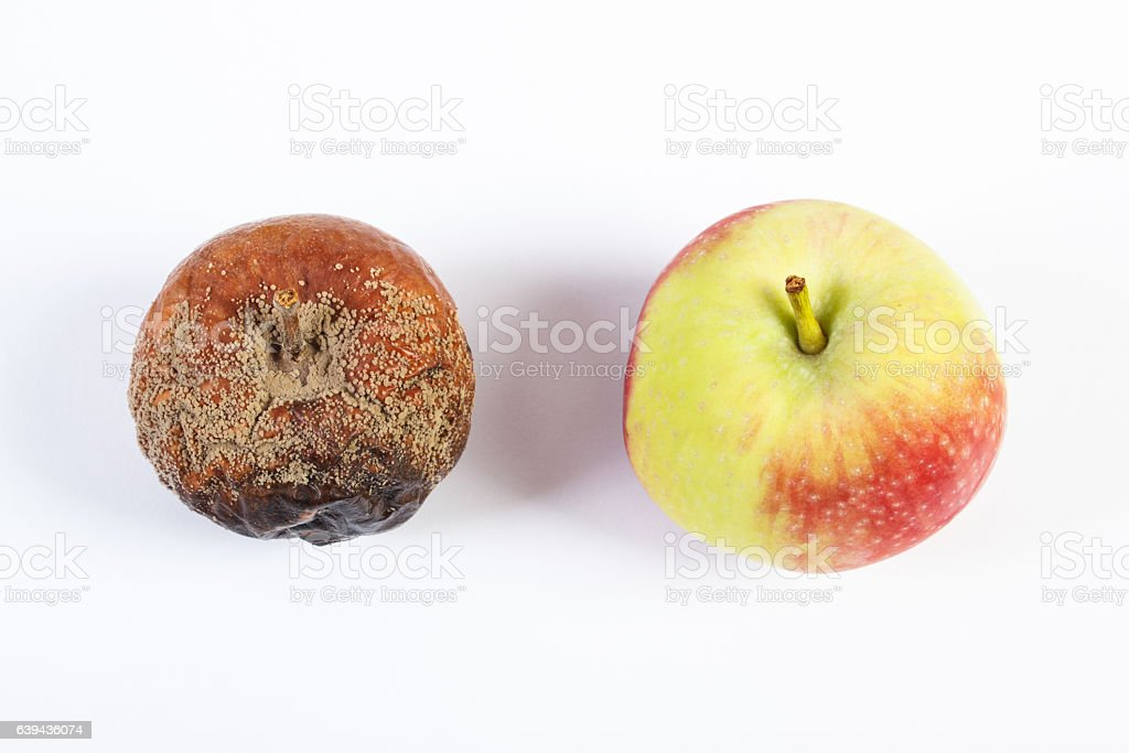 Old wrinkled moldy and fresh apple on white background stock photo