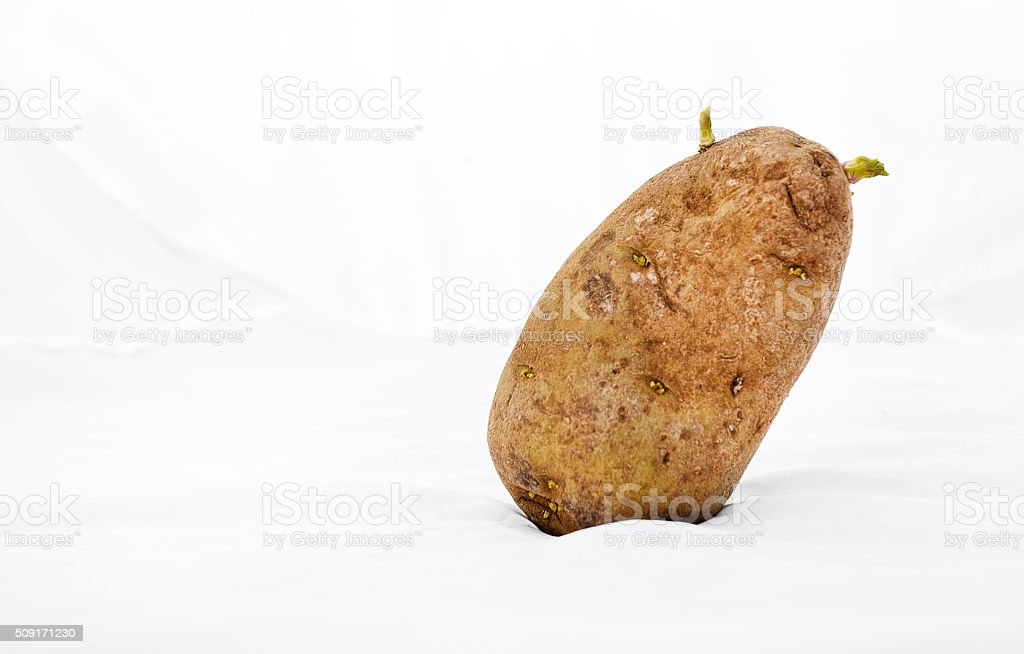 Old, Wrinkled Potato Resting Askew stock photo