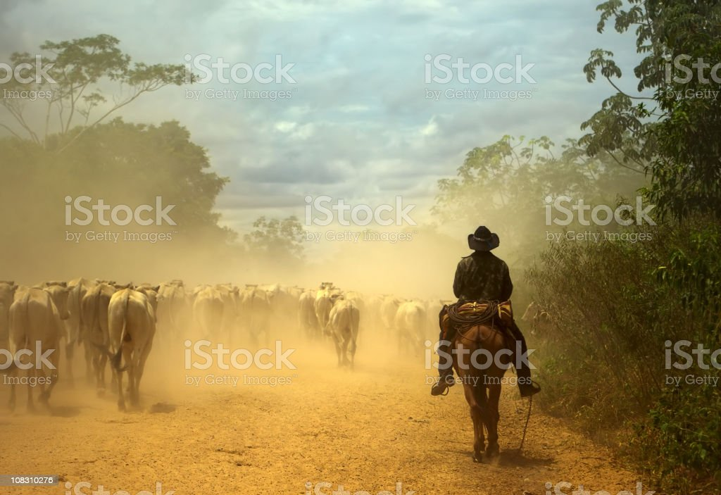 Oldfashioned cowboy at cattle drive. Pantanal wetlands, Brazil stock photo