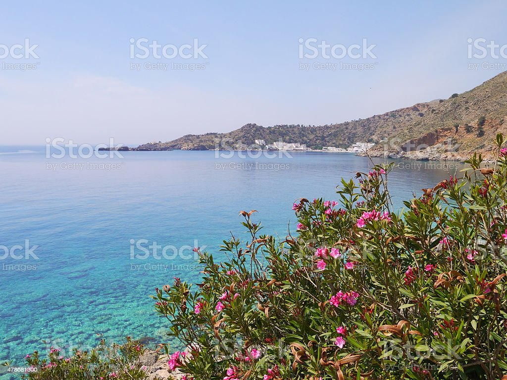 Oleander and blue sea stock photo