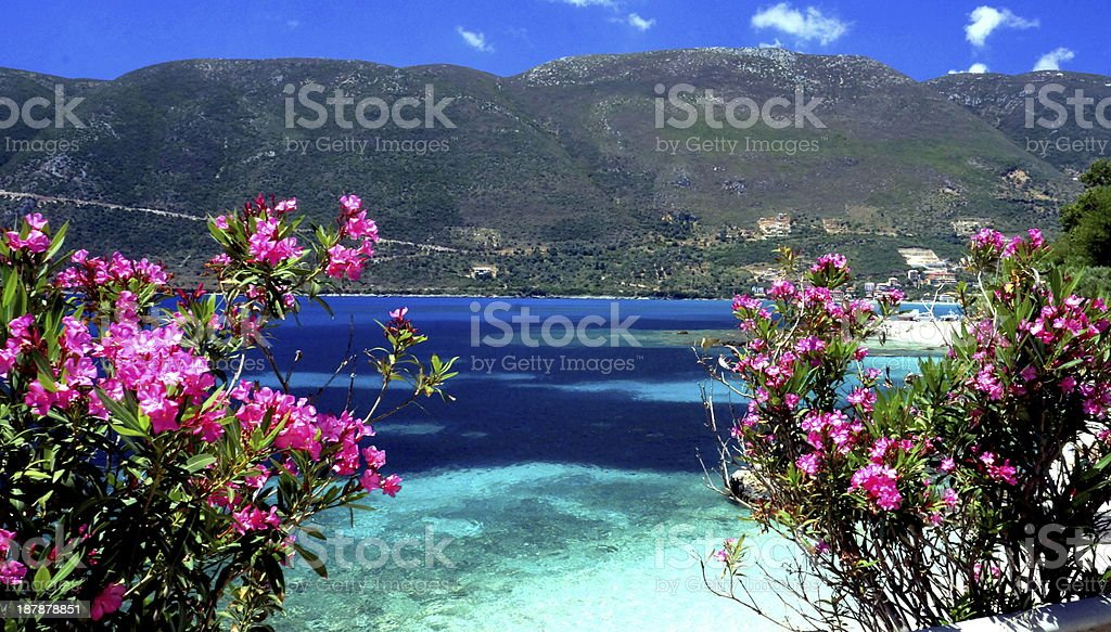 Oleander in Greece with ocean and mountain view stock photo