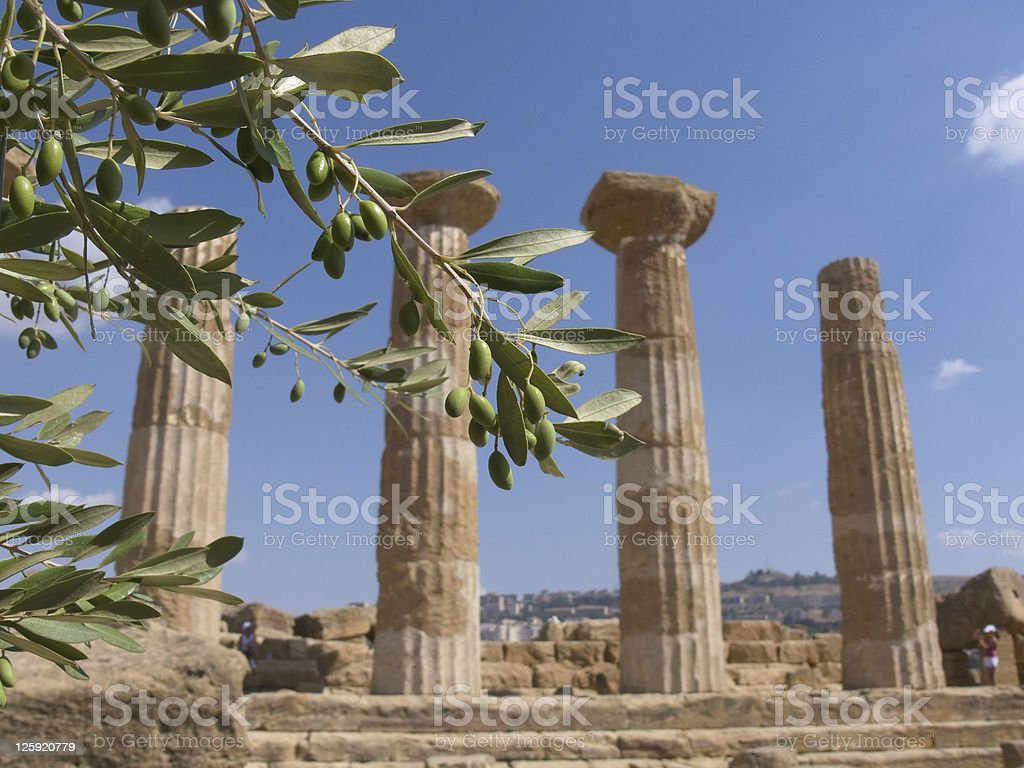 Olive Branch And Greek Column stock photo