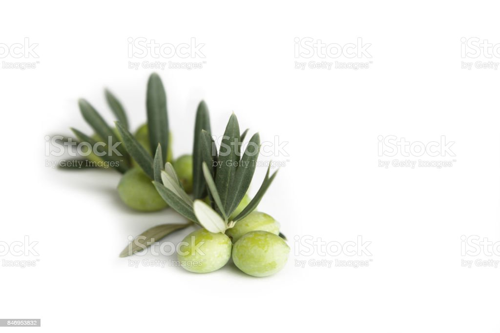 Olive branch and green olives stock photo