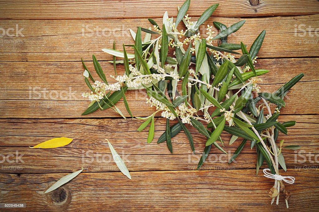 Olive branch in bloom stock photo