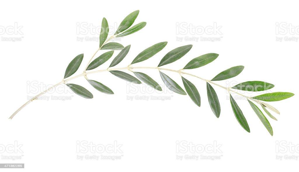 Olive branch, peace symbol stock photo
