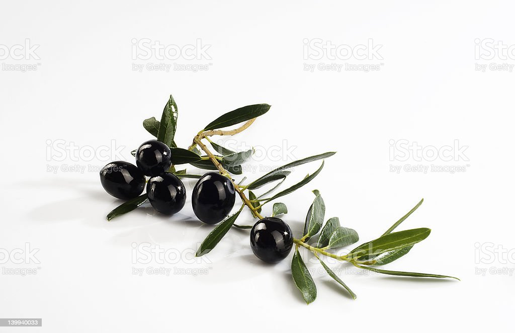 Olive branch with olives on white background stock photo