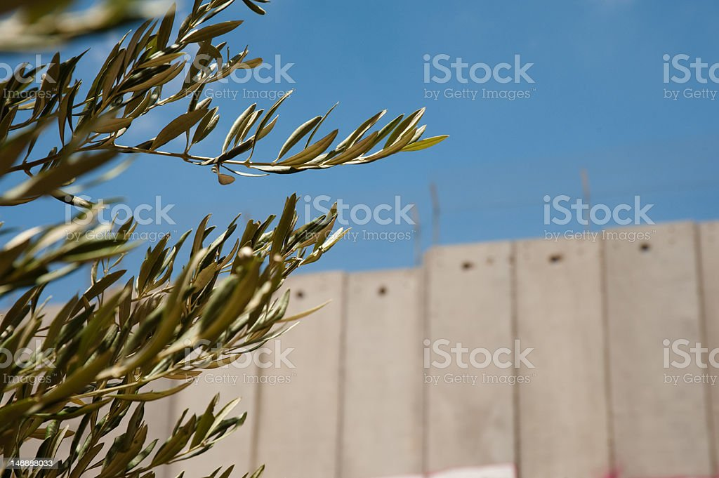 Olive Branches and Israeli Separation Barrier royalty-free stock photo