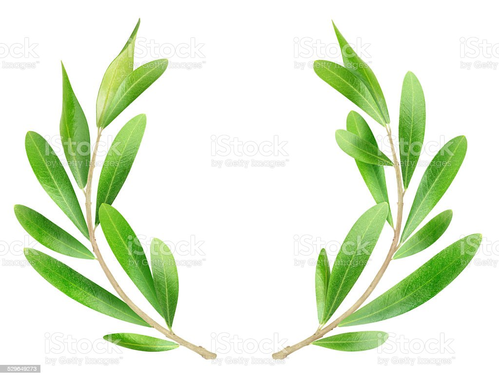 Olive branches on white background stock photo