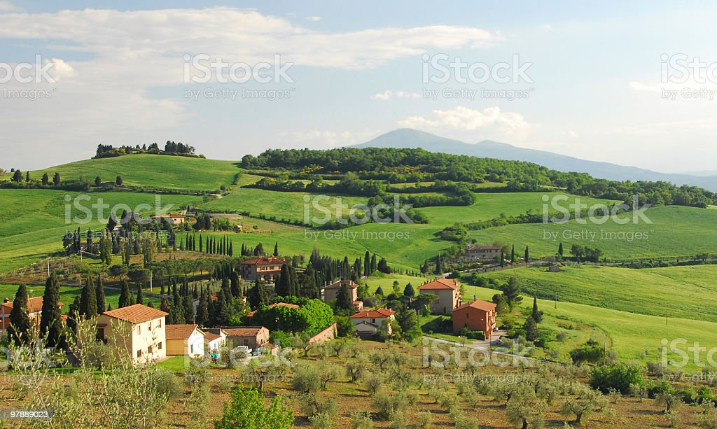 Olive Farm stock photo