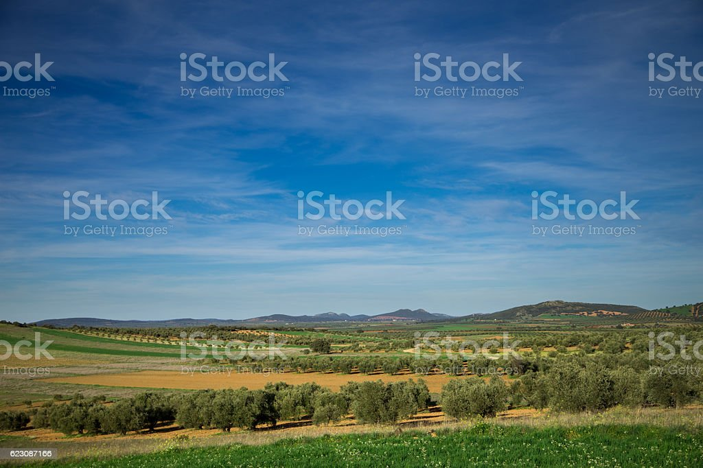 Olive Farms in Ciudad Real Province, Spain stock photo