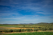 Olive Farms in Ciudad Real Province, Spain