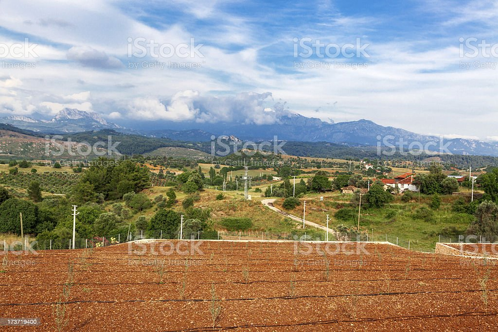 Olive fields royalty-free stock photo