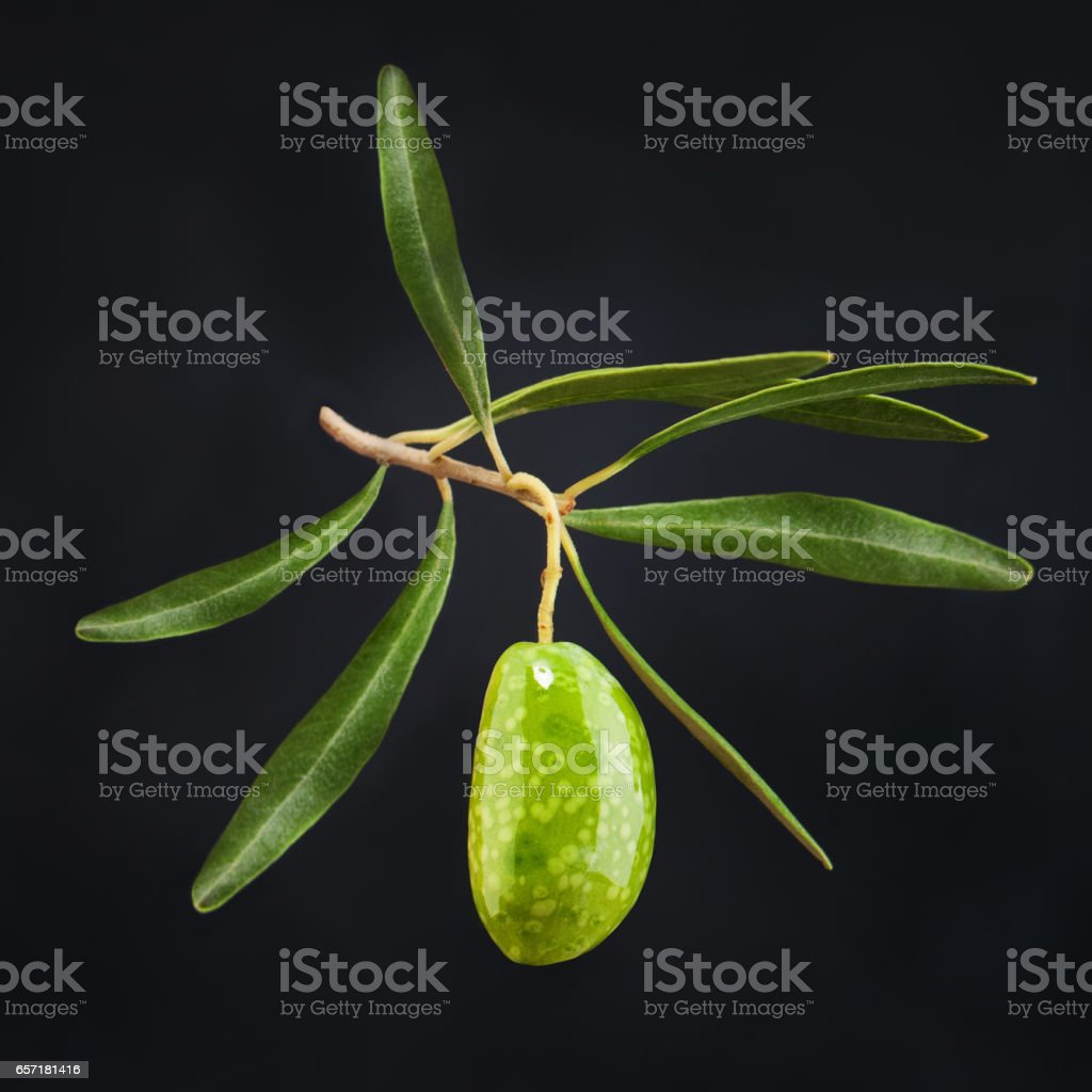 Olive Fruit with Green Leaves on Dark Background stock photo