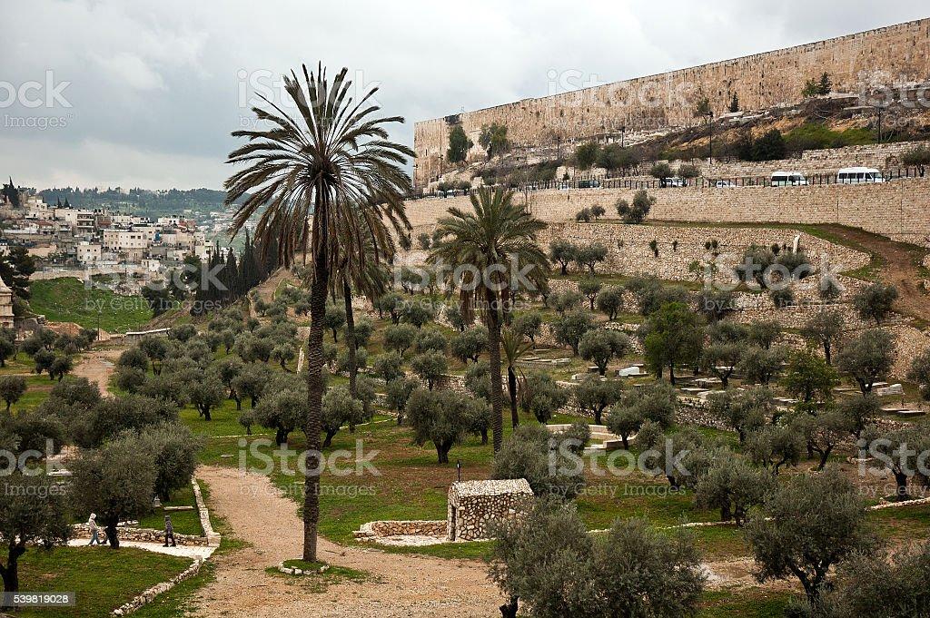 Olive garden in Jerusalem, Israel stock photo