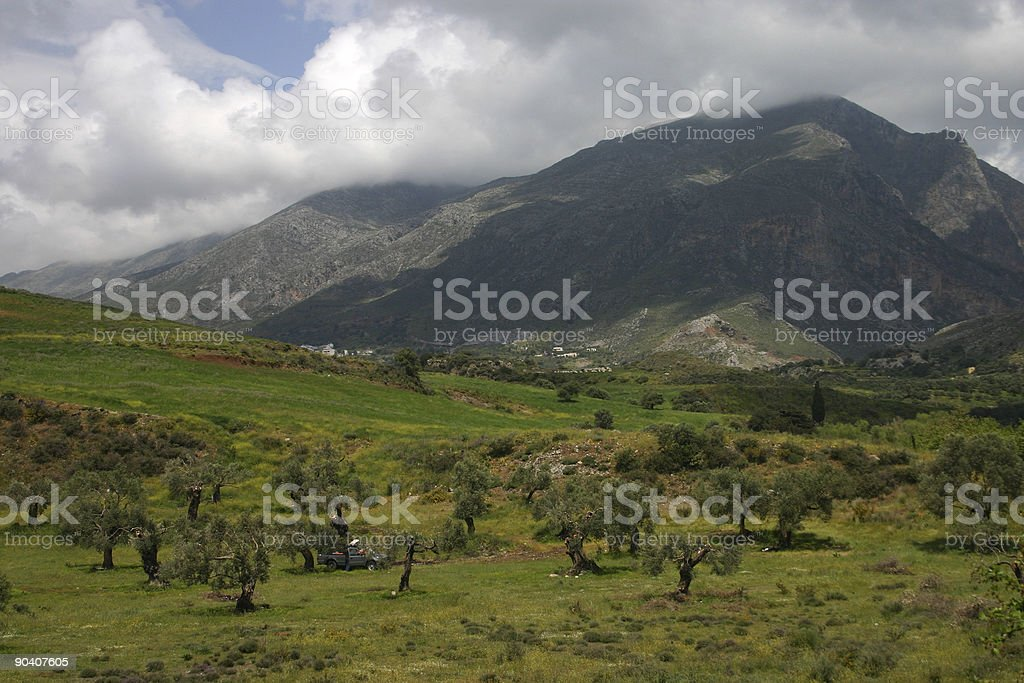 Olive grove in  Crete, Greece royalty-free stock photo