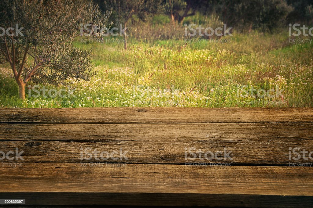 Olive grove with wood table stock photo