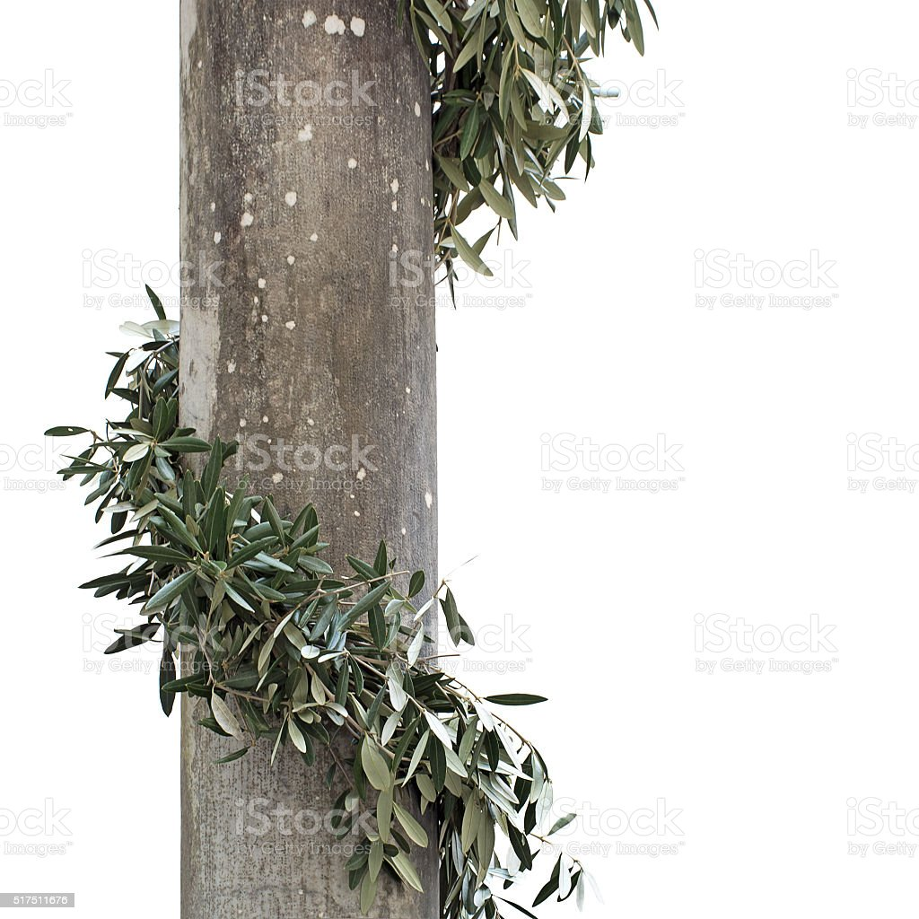 Olive leaves around stone column, isolated on white. stock photo