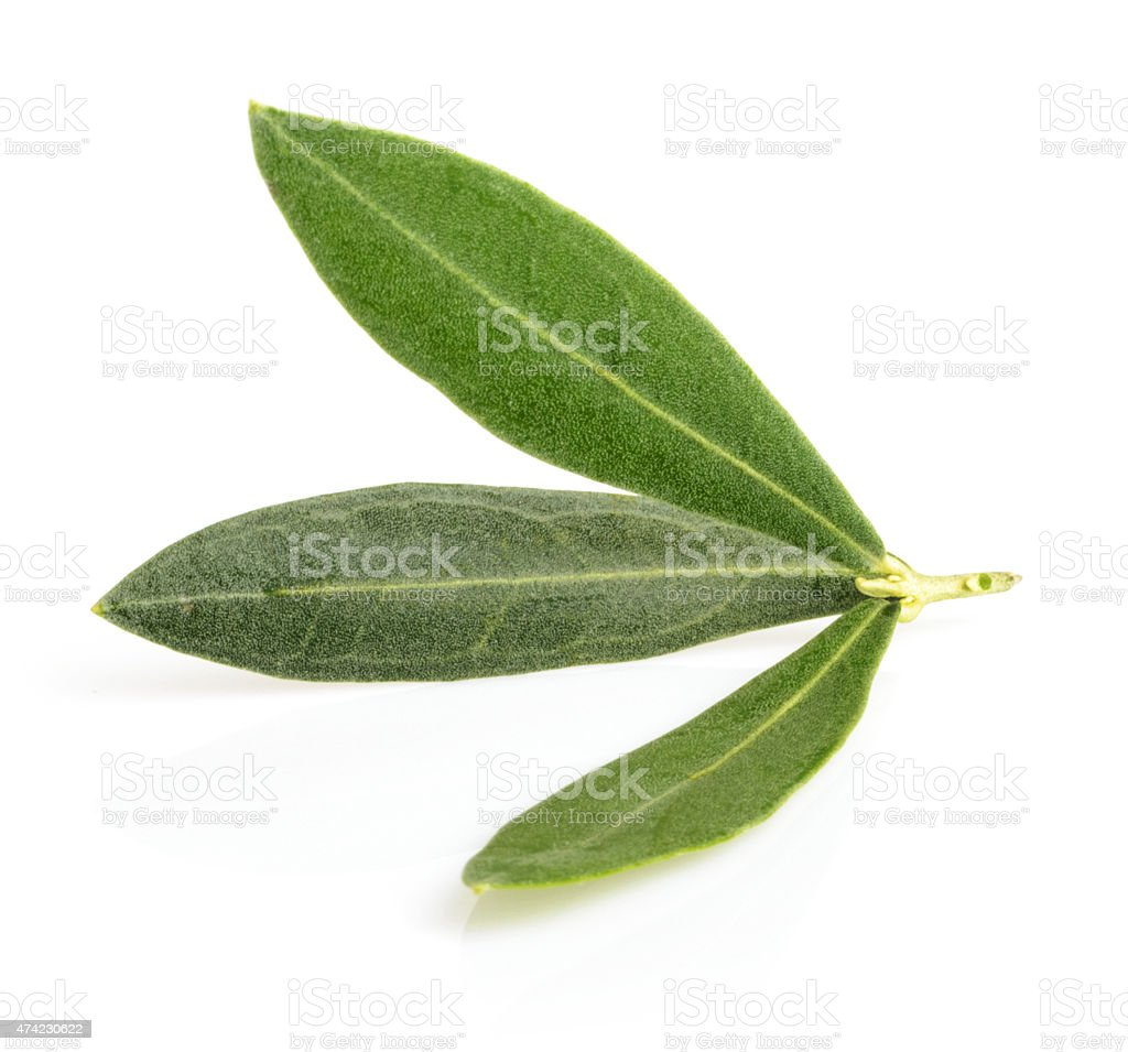 olive leaves with shadow isolated on white stock photo