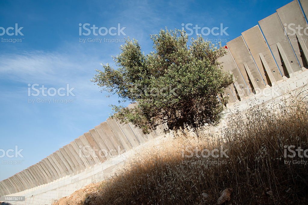 Olive Tree and Israeli Separation Wall royalty-free stock photo