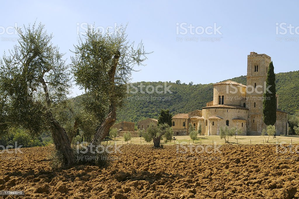 Olive tree and medieval abbey royalty-free stock photo