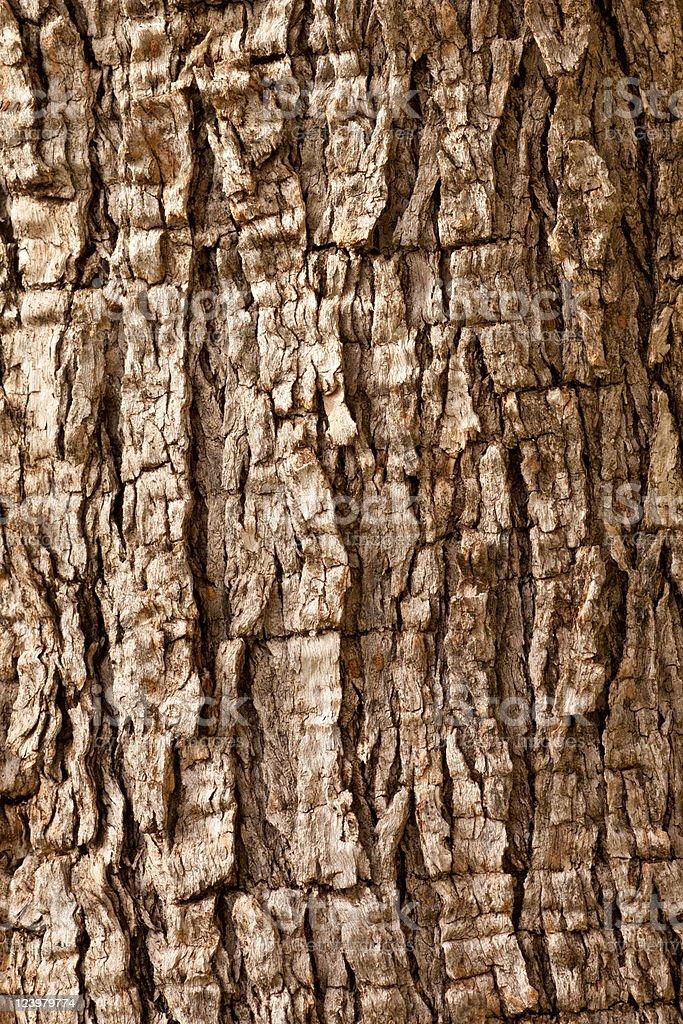 Olive Tree Bark Background royalty-free stock photo