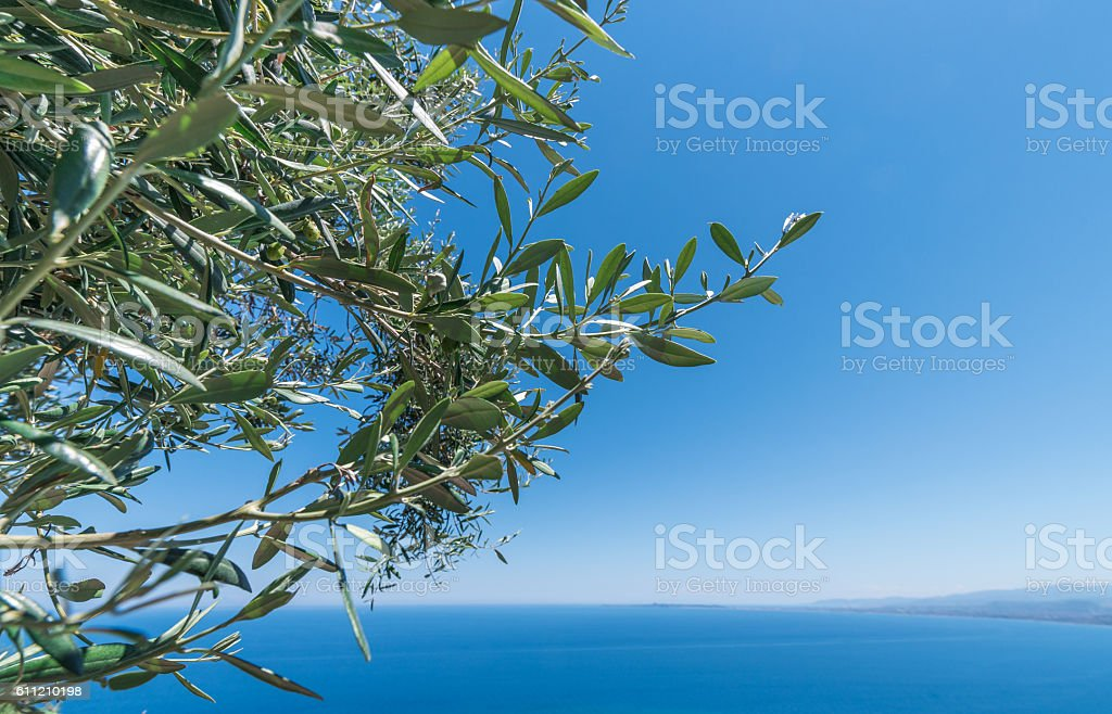 Olive tree branches with sea in the background stock photo