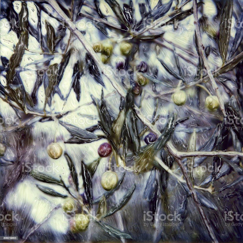Olive Tree Detail royalty-free stock photo