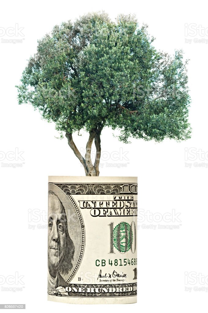 Olive tree growing from dollar bill stock photo