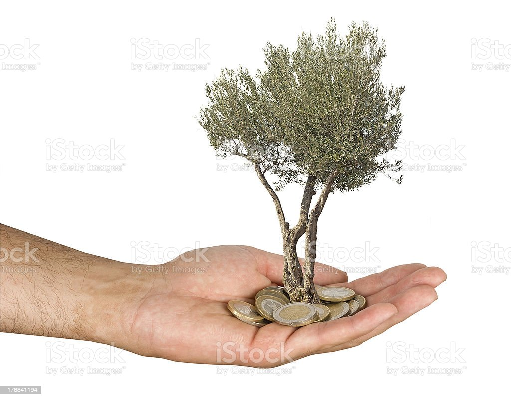Olive tree in palm as a gift royalty-free stock photo