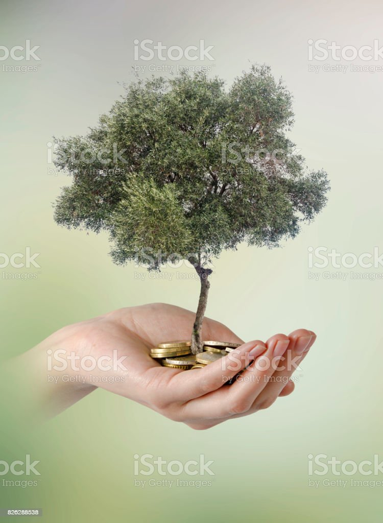 Olive tree in palm as a gift stock photo