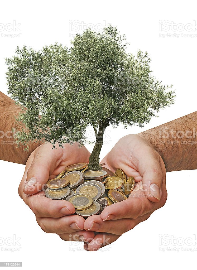 Olive tree in palms as a gift royalty-free stock photo