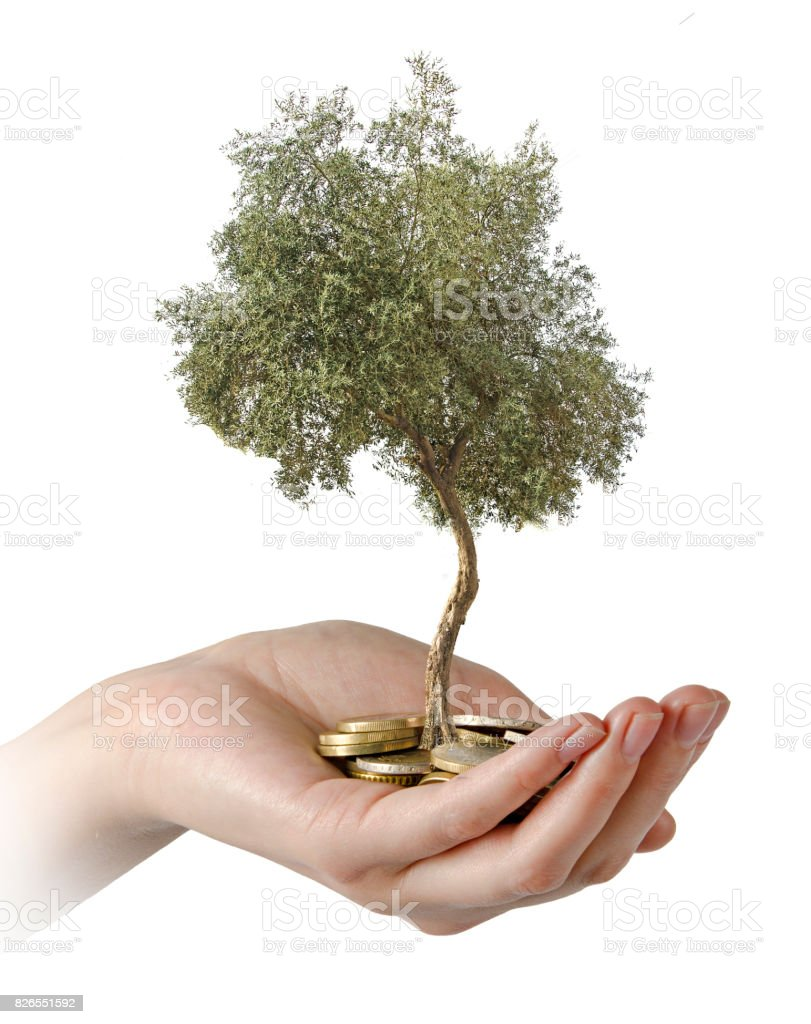 Olive tree in palms as a gift stock photo