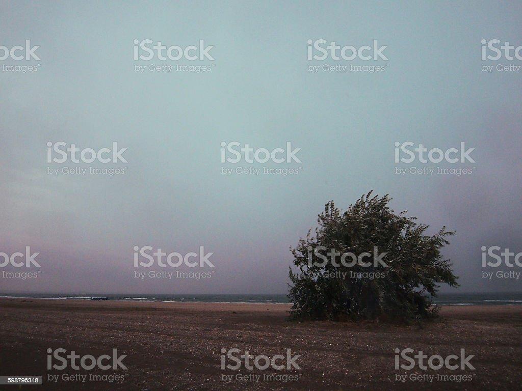 Olive tree on a beach stock photo