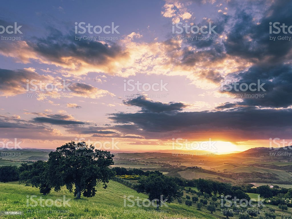 Olive tree on the Tuscan hills royalty-free stock photo