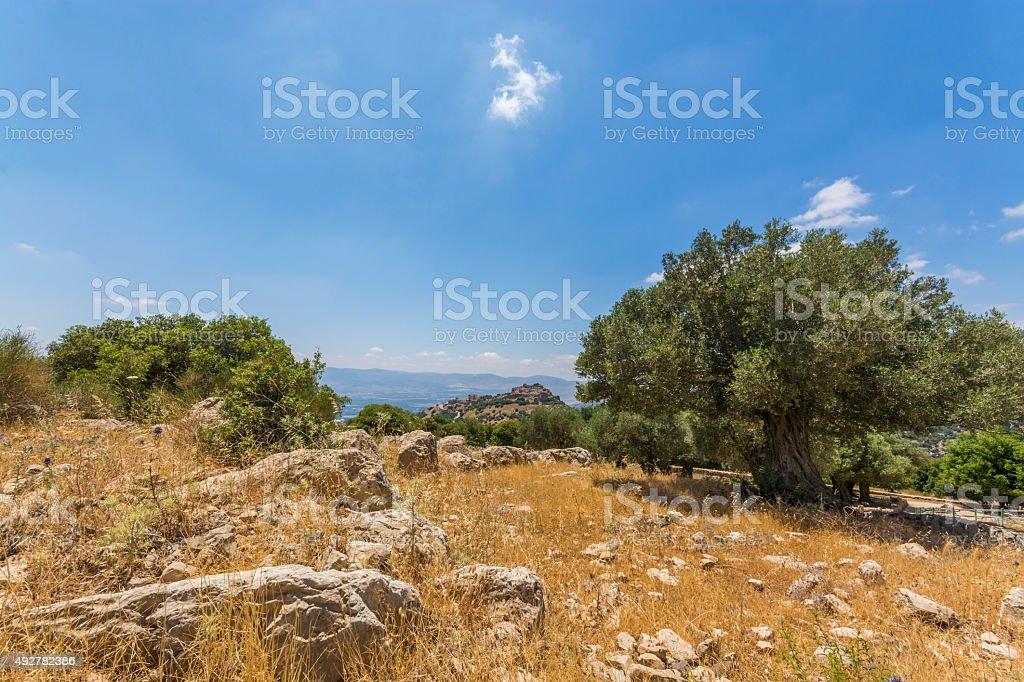 Olive tree overlooking Nimrod Fortress stock photo