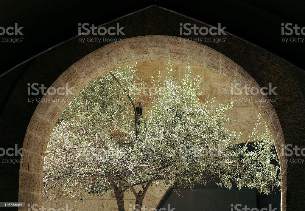 Olive Tree through Stone Arc stock photo
