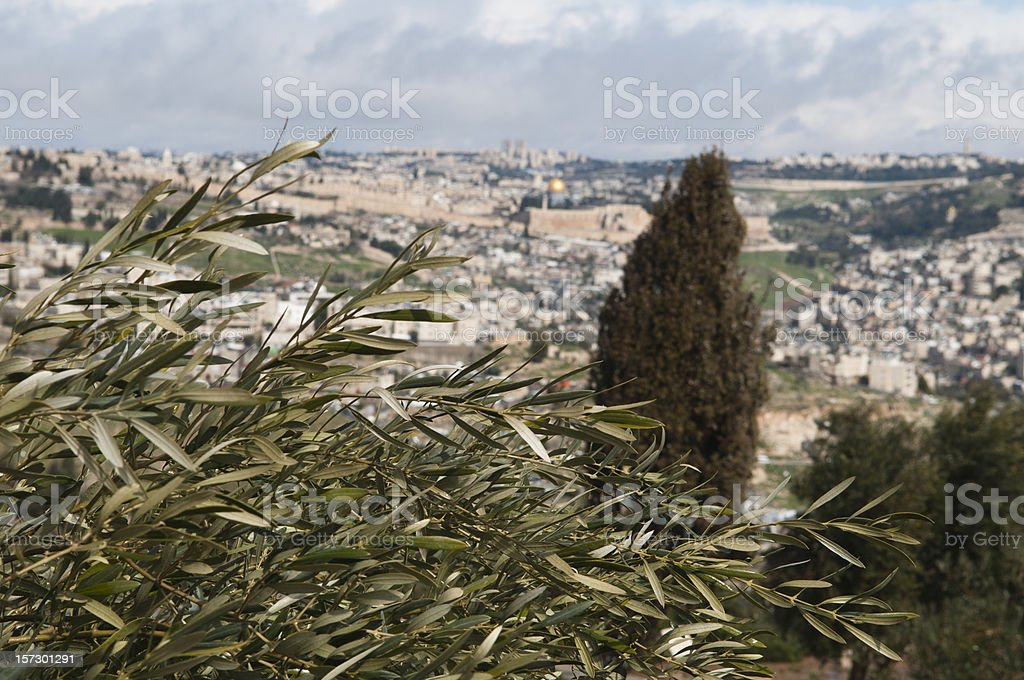 olive tree with view of jerusalem royalty-free stock photo
