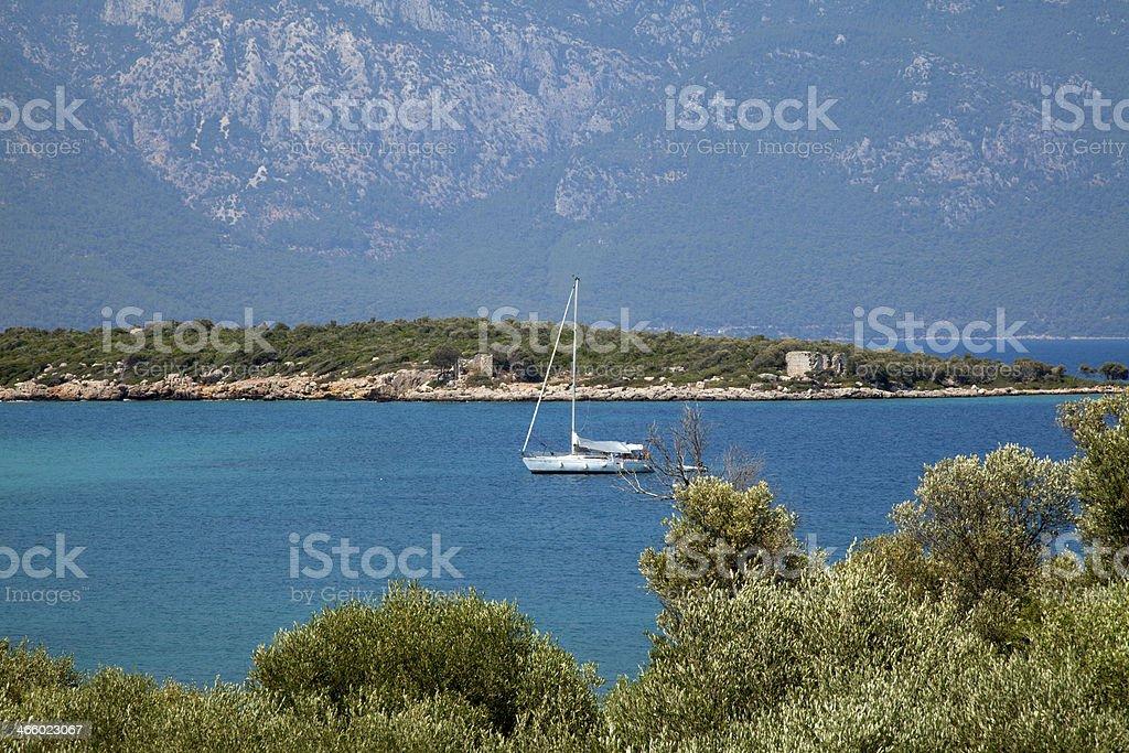 olive trees and mediterranean sea stock photo