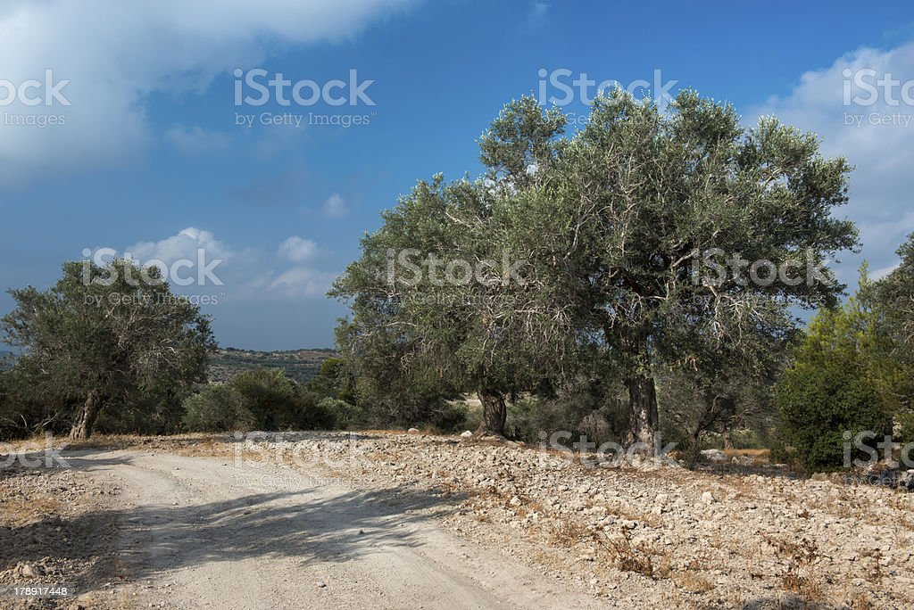 Olive trees at a country road near Jerusalem royalty-free stock photo