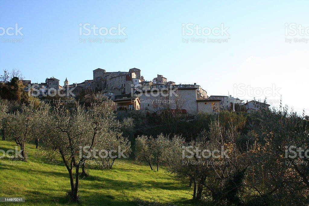 Olive Trees below Italian hilltop town stock photo