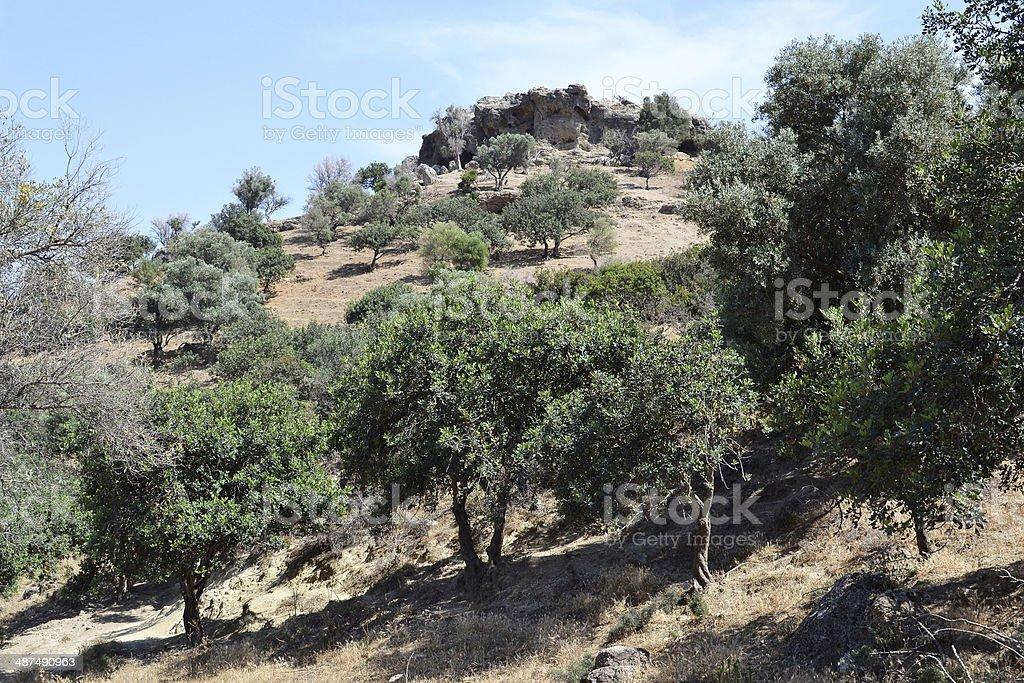オリーブの木の丘の上にございます。 ロイヤリティフリーストックフォト
