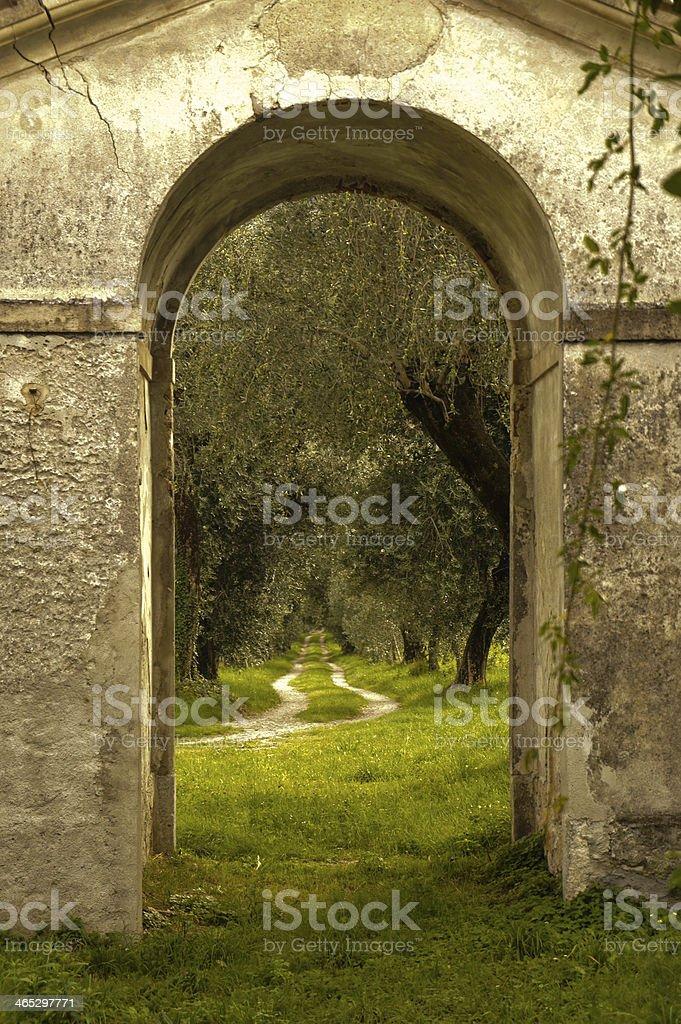 Olivegrove royalty-free stock photo