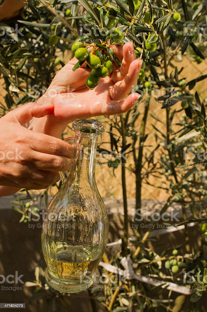 Olives And Bottle Includes Oil In The Hand royalty-free stock photo