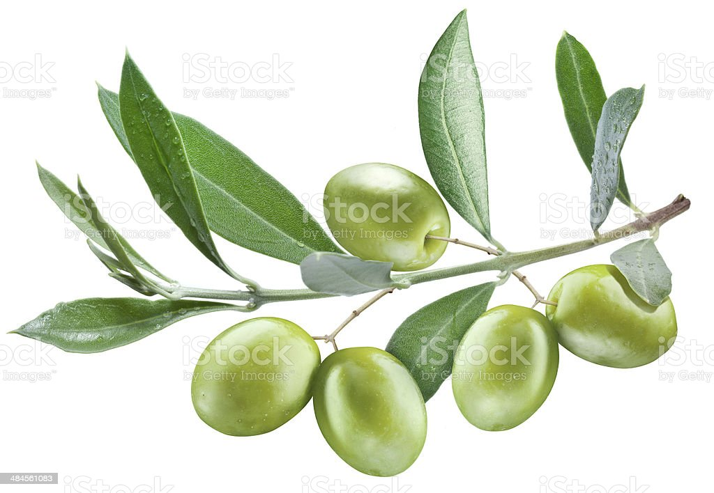 olive's branch with leaves and olives stock photo
