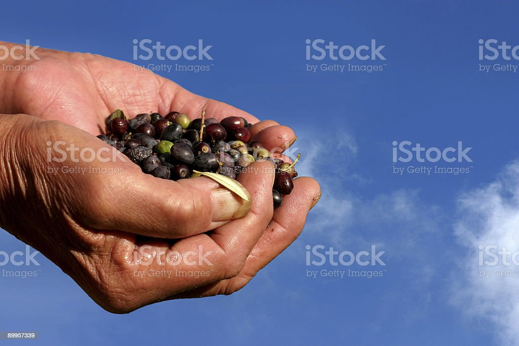Olives in hands royalty-free stock photo