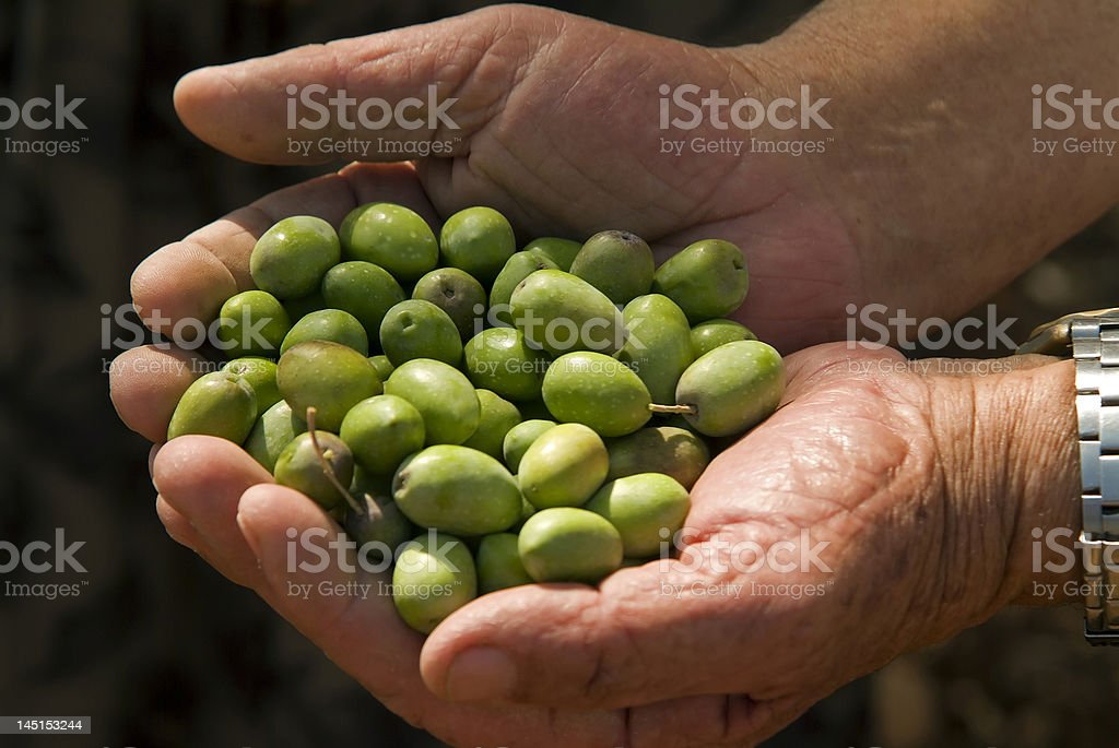 olives in old man's hand royalty-free stock photo