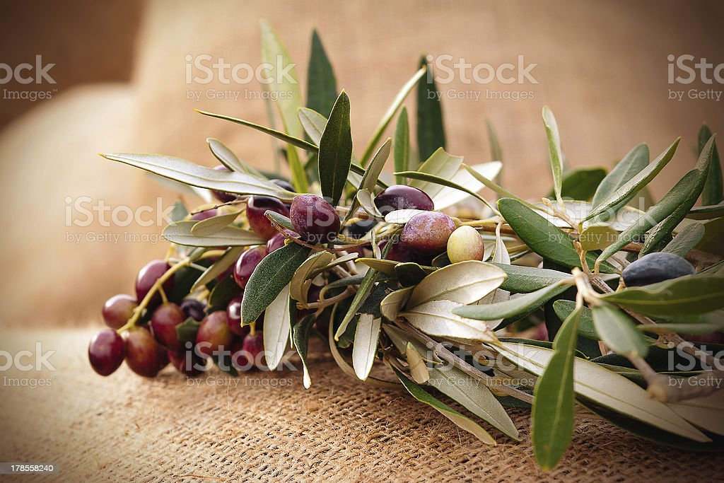 Olives on a sack royalty-free stock photo