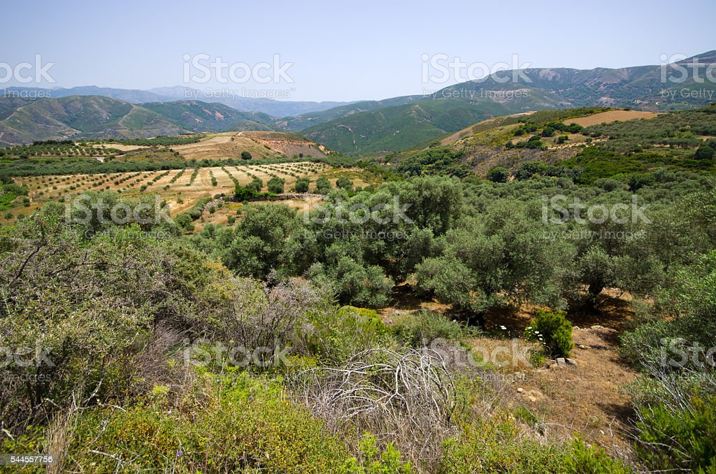 Olives plantation in the mountains of Crete, Greece stock photo
