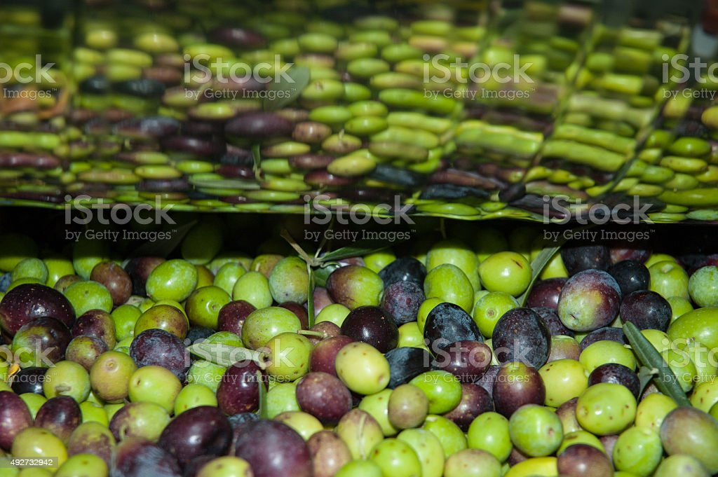 Olives reflected in the mill royalty-free stock photo